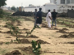 tree plantation3